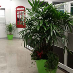 CallCenter-Plant-Portfolio-Feature_Thumb