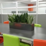 Dining Table Planter Box Sansivieria