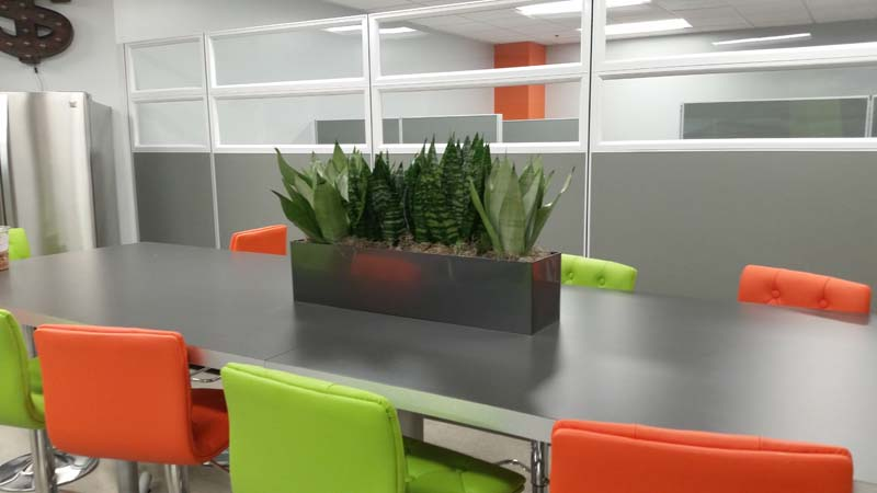 Sansevieria-trifasciata-office-install