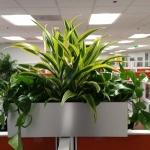 Planter Box Arrangement Indoor Plants