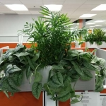 Topsider Arrangement Indoor Plants