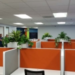 Cubicle Top Interior Plants
