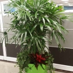 Call Center Entry Raphis Palm Indoor Plants Green