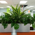 Call Center Cubicle Top Indoor Planter Boxes