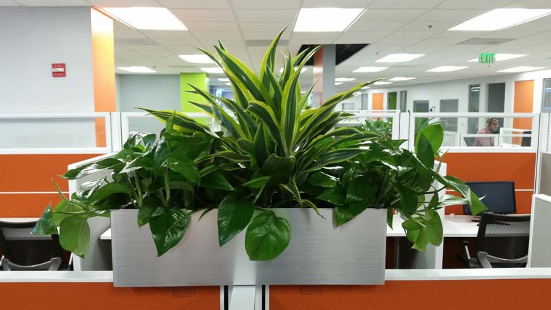 Call center cubicle top indoor planter boxes plantopia for Indoor plant maintenance