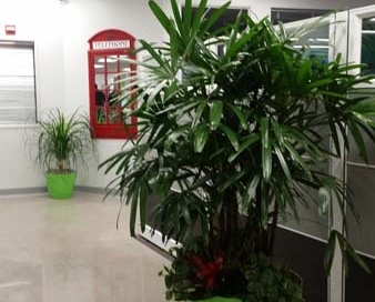 Entry Perspective Exotic Interior Plants