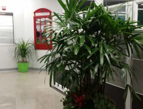 Call Center – Interior Plants – Santa Ana, CA