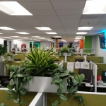 Call Center Cubicle Topsiders Plants