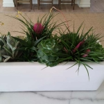 Dana-Point-Interior-Plants-Succulents-Orchids (1)