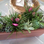 Dana-Point-Interior-Plants-Succulents (10)