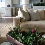 Dana-Point-Interior-Plants-Succulents-Orchids (4)