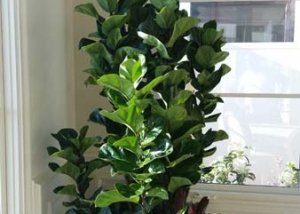 Dana-Point-Interior-Plants-Succulents-Orchids (7)