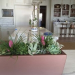 Dana-Point-Interior-Plants-Succulents-Orchids (8)