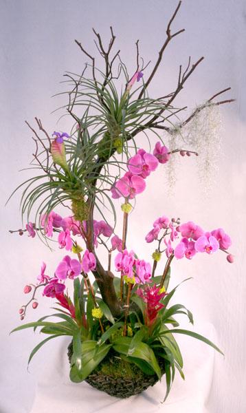 Orchid Design Plantopia Interior Plant Service