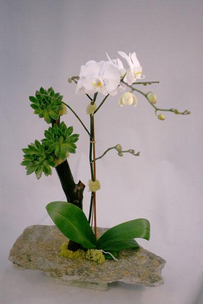 orchidaceae-6