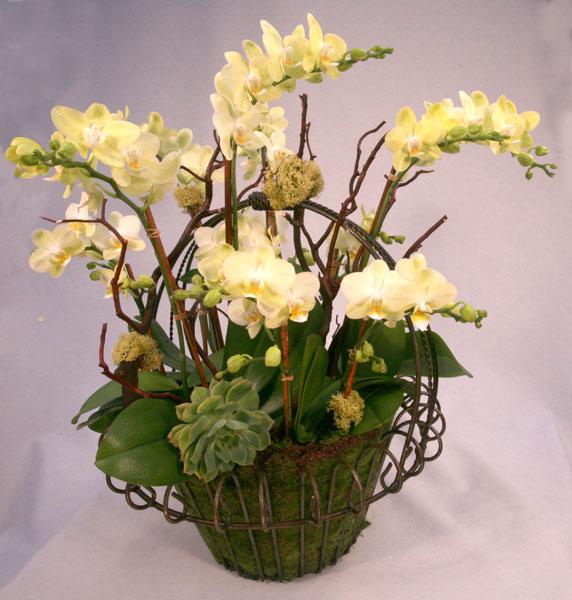 orchidaceae-5
