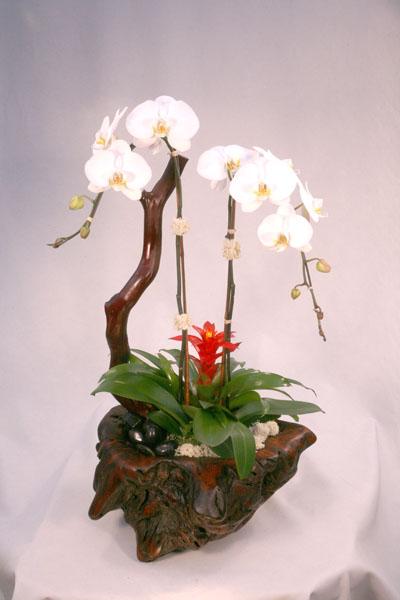orchidaceae-4