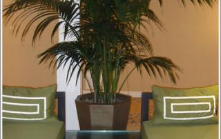 KentiaPalm-Plants-HotelDel