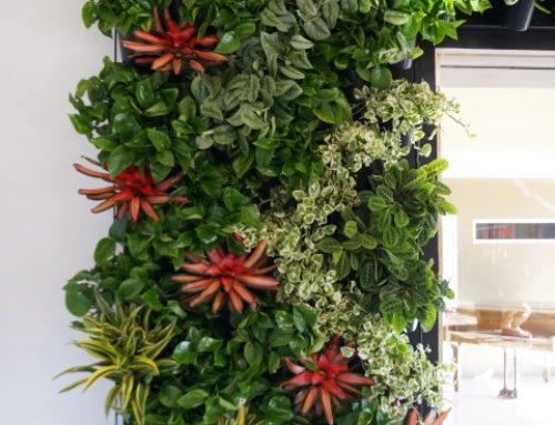Vertical Garden – Solana Beach, CA