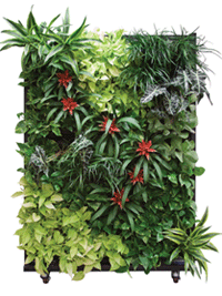 planters-containers-livingwall