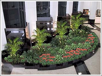 Office plant service commercial plant service for Indoor plant maintenance