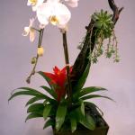 orchid-design