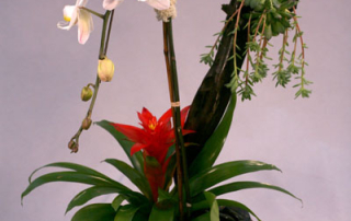 Orchid-Phaleonopsis-Bromeliad-Sculpture