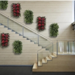Plant Portraits on Stairs