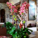 Rancho-Pacifica-Estate-Home-Indoor-Plants (1)