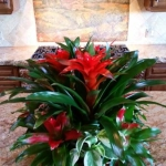 Rancho-Pacifica-Estate-Home-Indoor-Plants (8)