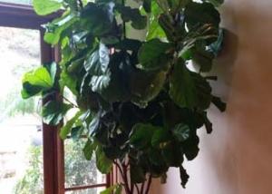 Rancho-Pacifica-Estate-Home-Interior-Plants-Gallery (1)