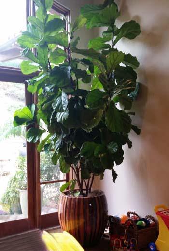 Rancho Pacifica Estate Home Interior Plants Gallery 1