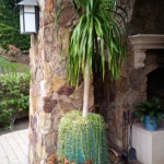Rancho-Pacifica-Estate-Home-Interior-Plants-Gallery (3)