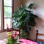Rancho-Pacifica-Estate-Home-Interior-Plants-Gallery (7)