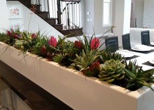 Residential-Interior-Plants-Succulents
