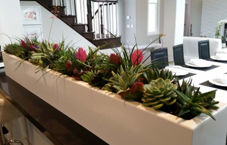 Portfolio Plantopia Interior Plant Service