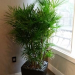 Residential-Interior-Plants-Raphis