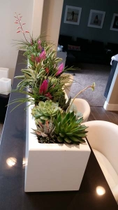 Residential-Interior-Succulents