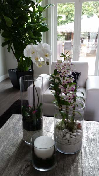 Interior plants orchids succulents residential interior succulents