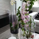 Residential-Interior-Plants-Orchids-Tillandsia