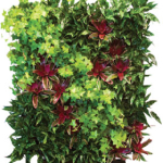 Living Wall Indoor Plants and Bromeliads
