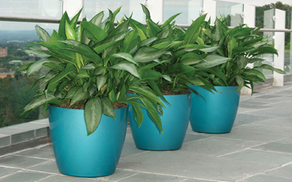 interior-plant-service-turquoise
