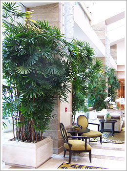 commercial-plant-service-hotel-lobby