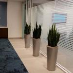 Sansivieria - Board Room Planters