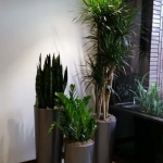 Building Lobby - Interior Plants Design - Modern & Sustainable
