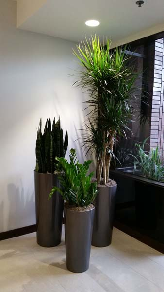Interior plants for building lobby plantopia interior for Interior designs with plants
