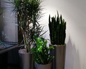 Building Lobby - Interior Plants Cluster Designs - Modern & Sustainable