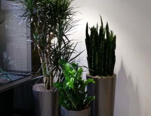 Interior Plants for Building