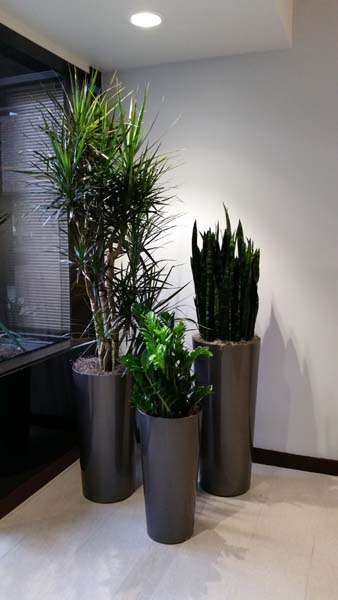 Call center interior plants santa ana ca plantopia for Interior designs with plants