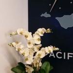 Exotic Silk Plants - Orchid Arrangement with Succulents